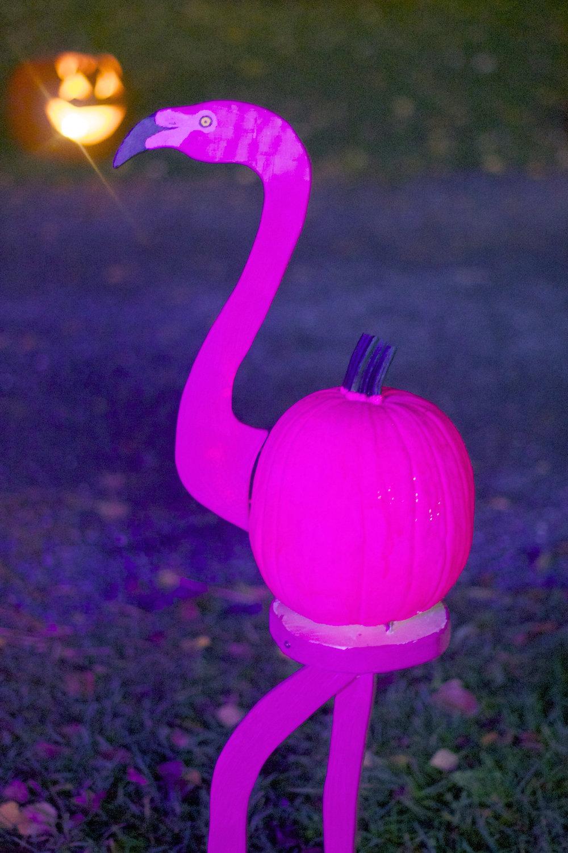 pink-flamingo-at-night.jpg