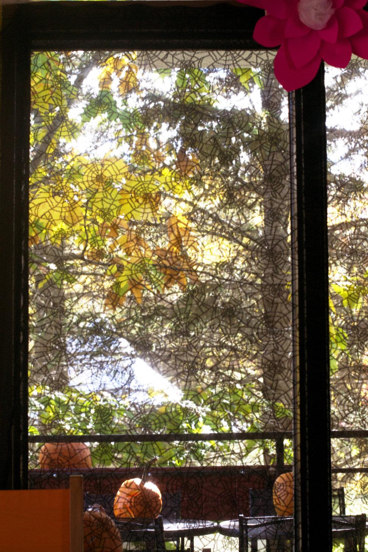 spider-web-window-cover.jpg