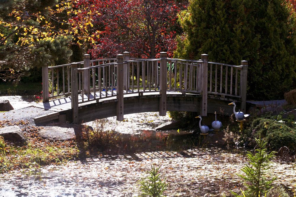 colourful-leaves-bridge.jpg