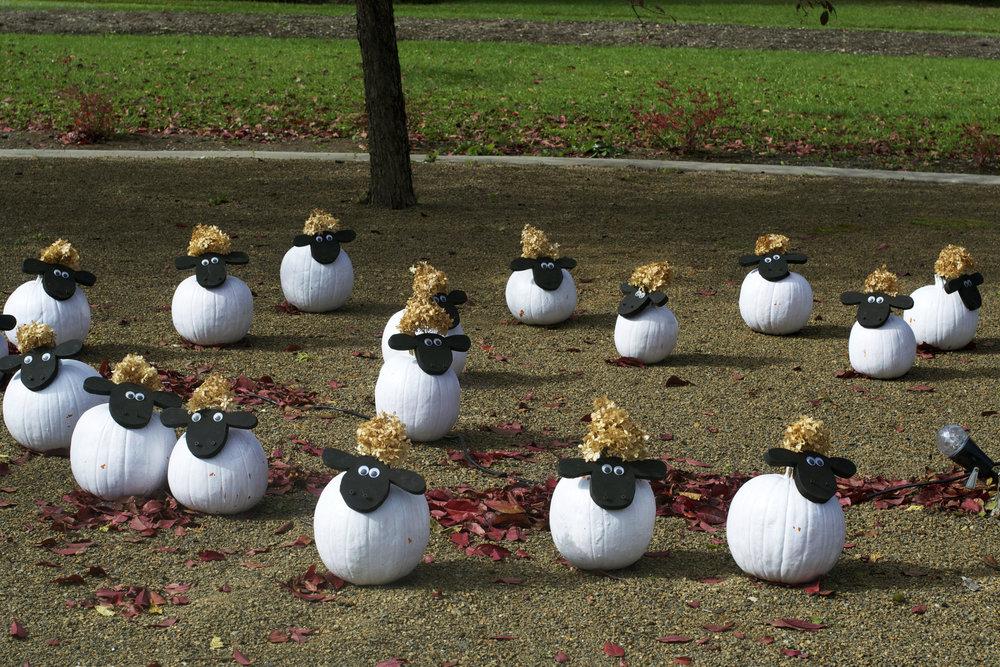 flock-of-white-sheep.jpg