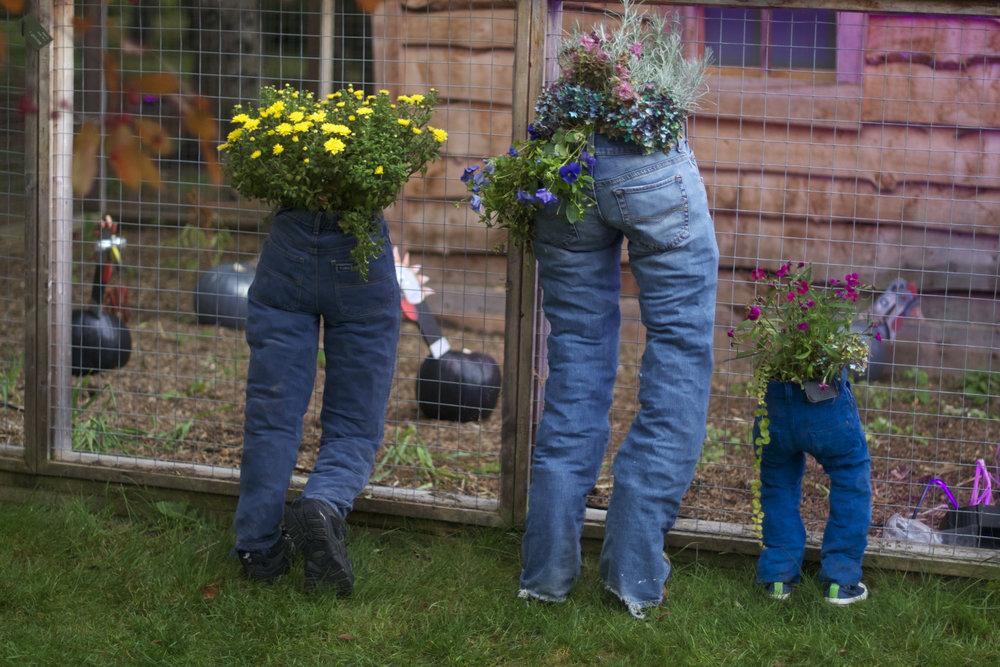 hen-house-pants-planters.jpg