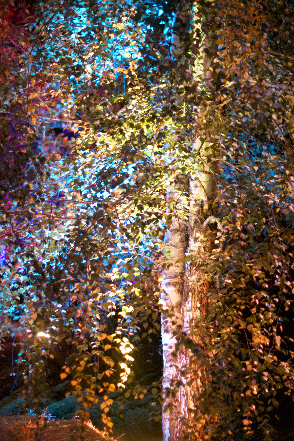 lit-up-awesome-autumn-leaves.jpg