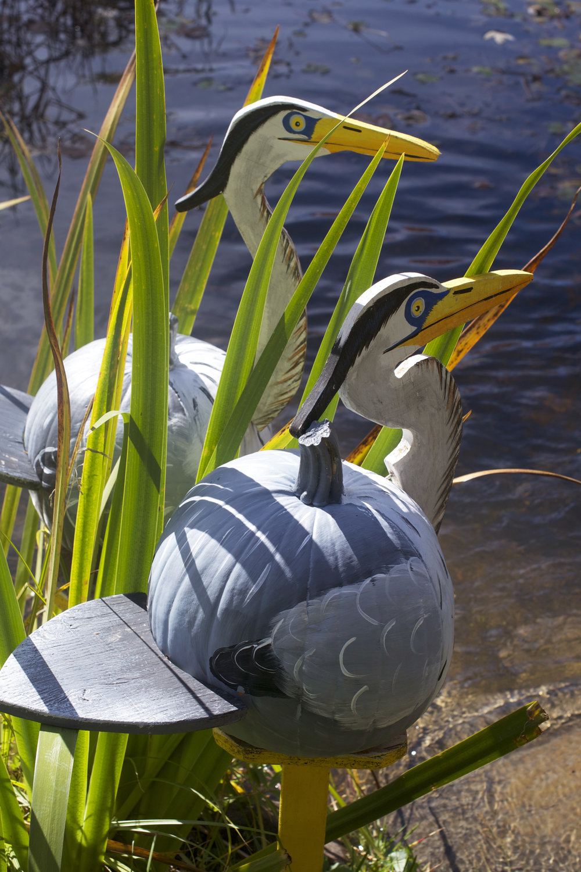 herons-in-the-grass.jpg