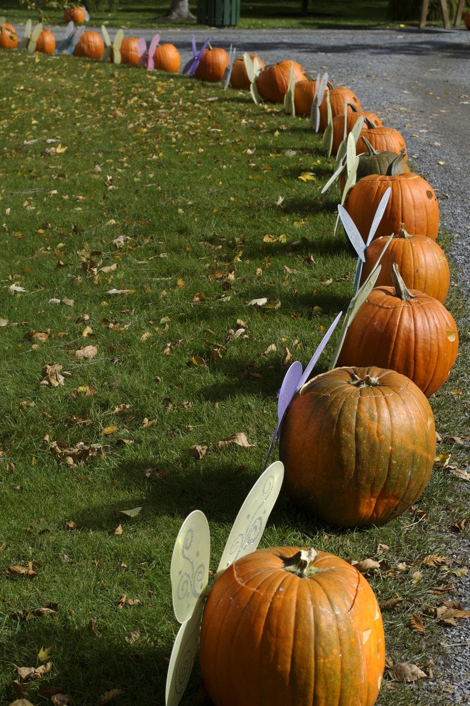 fairy-pumpkins.jpg