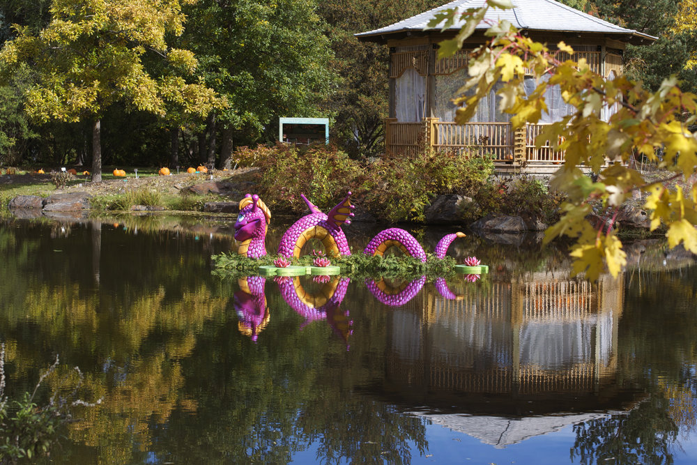 reflection-dragon-house.jpg