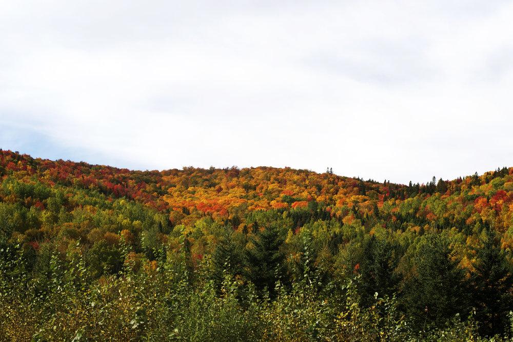 fall-colours.jpg