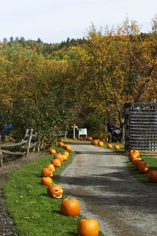 fall-pumpkin-path.jpg