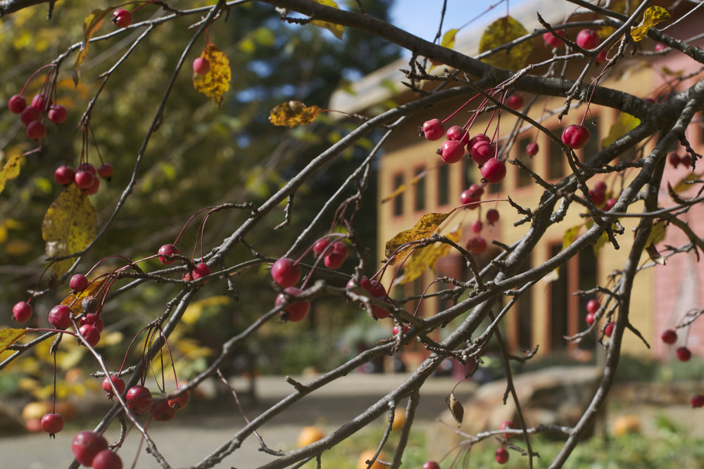 peeking-through-berry-tree.jpg
