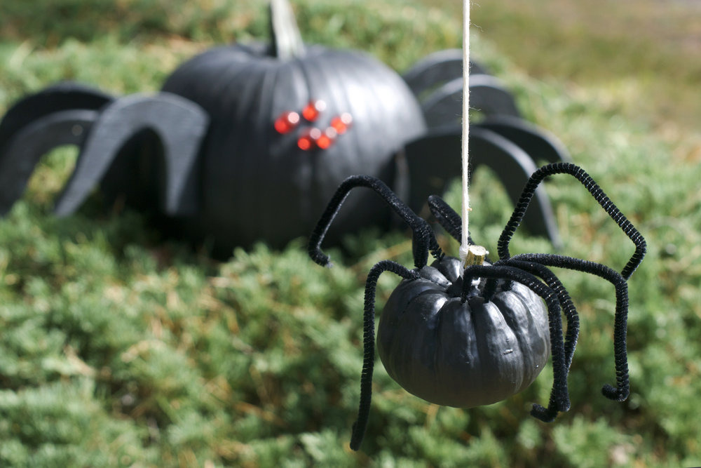 dangling-spider-and-big-one.jpg