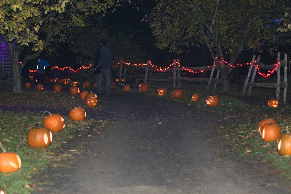 pumpkin-walk-trail.jpg