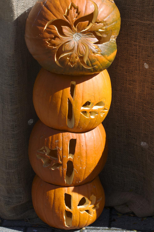 triple-flower-stem-pumpkins.jpg