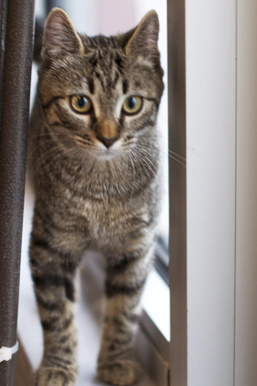 between-window-and-curtain-kitty.jpg