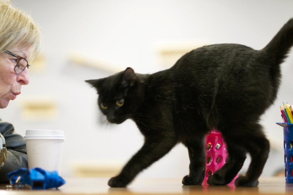 black-cat-on-art-table.jpg