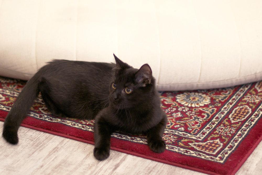 black-kitty-by-round-cushion.jpg