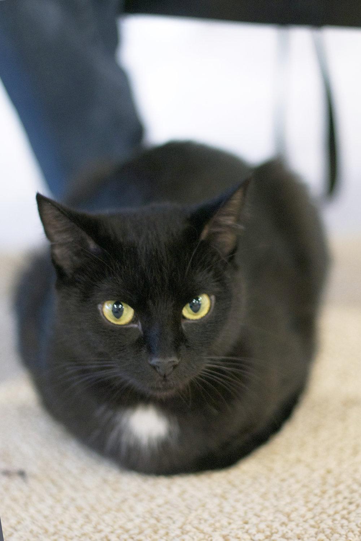 black-kitty-under-the-table.jpg