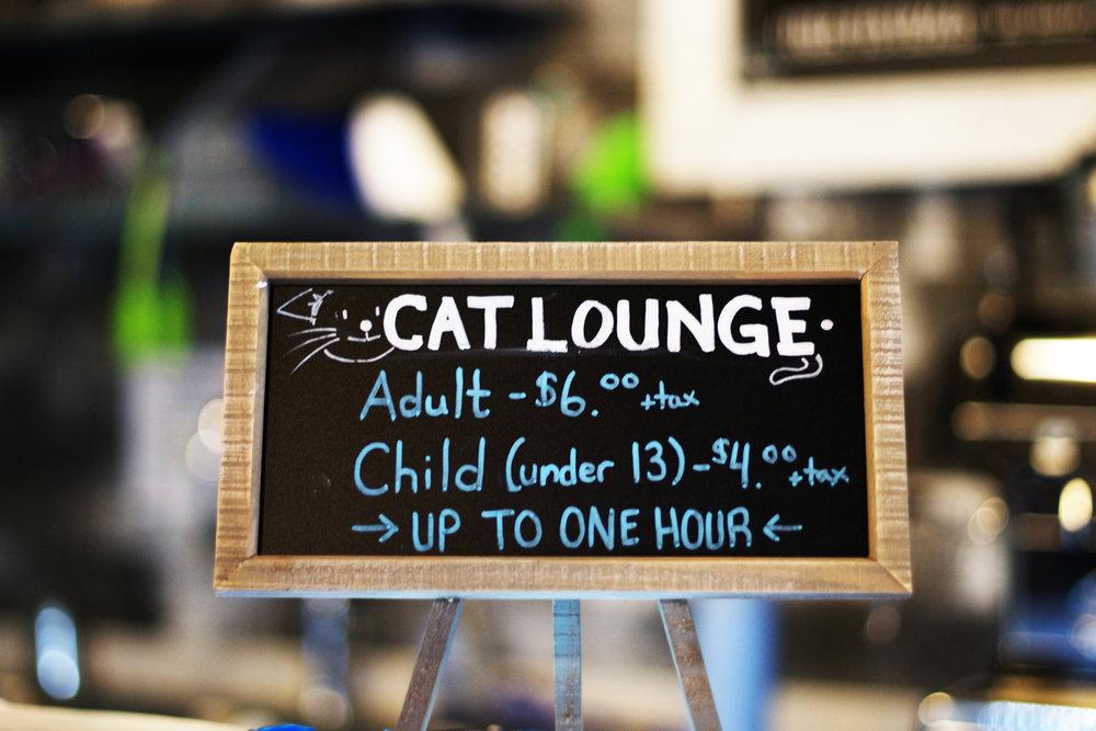 cat-lounge.jpg