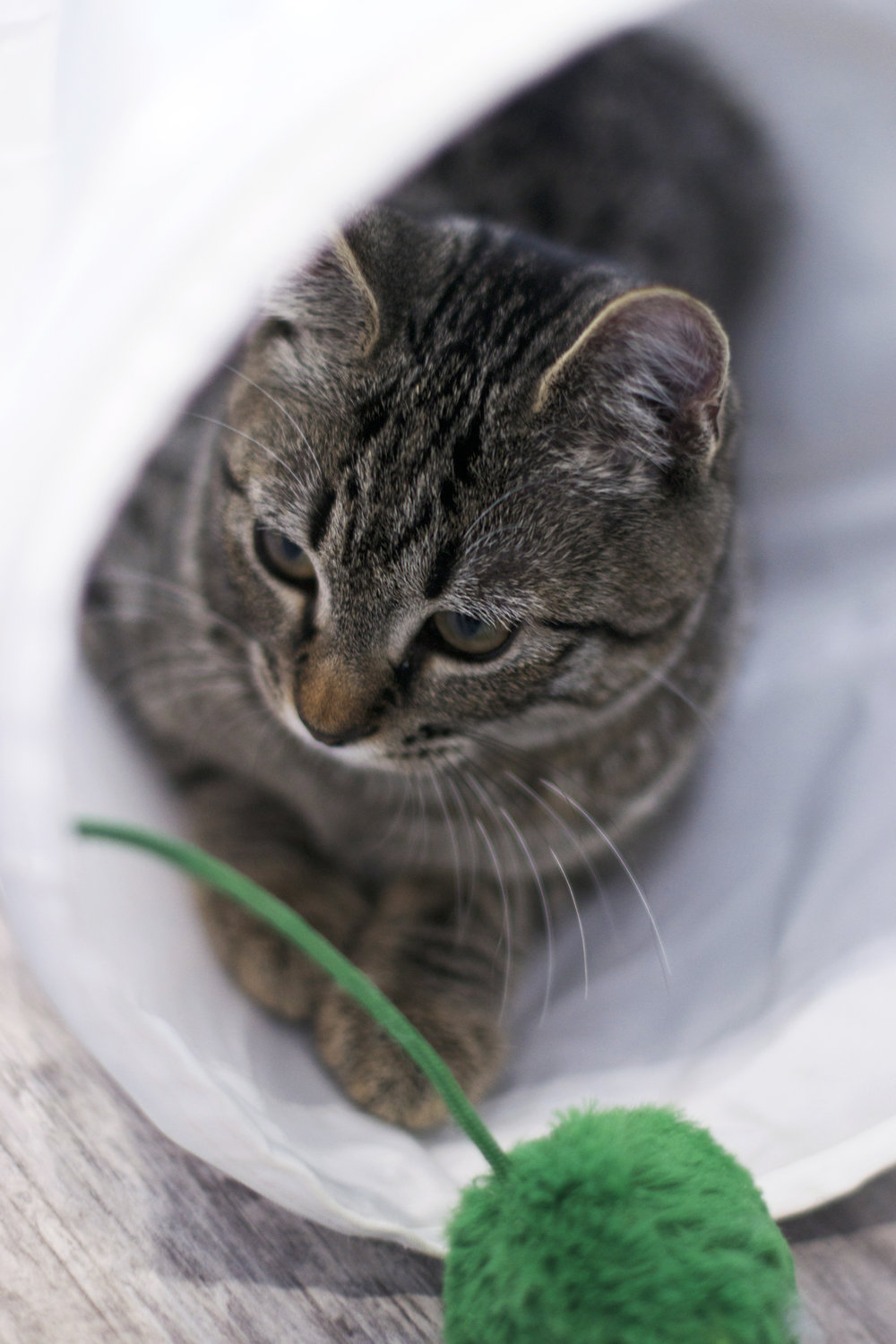 kitty-in-tube-with-green-ball.jpg
