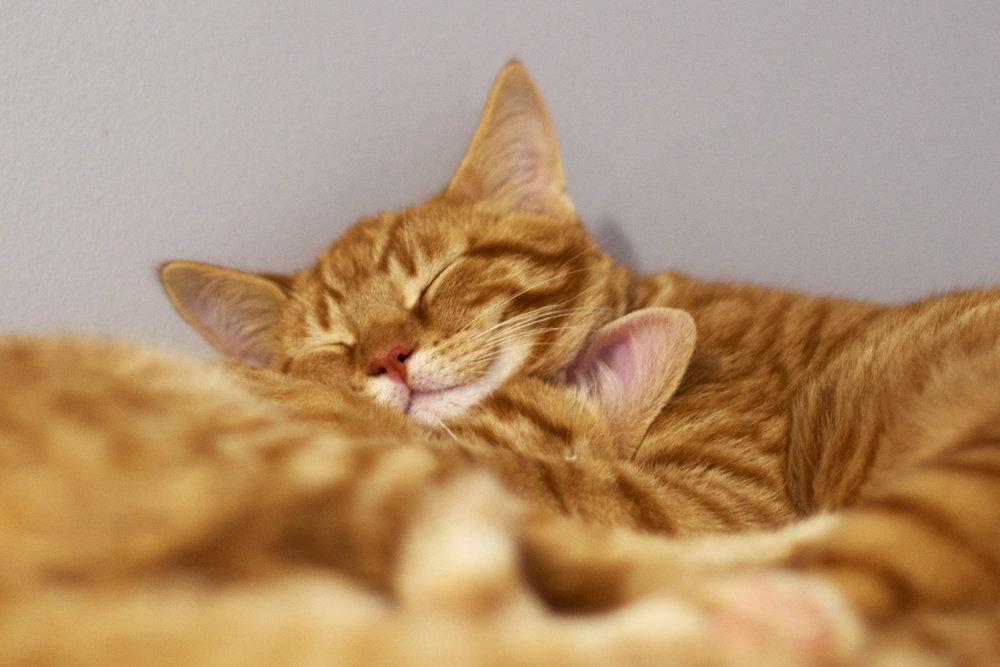 marmalade-snuggle-smiling-cat.jpg