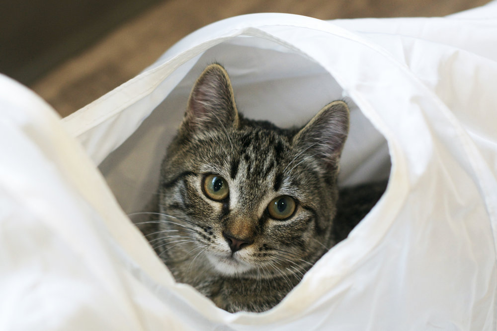 tiger-peeking-up-at-me-through-the-tunnel.jpg