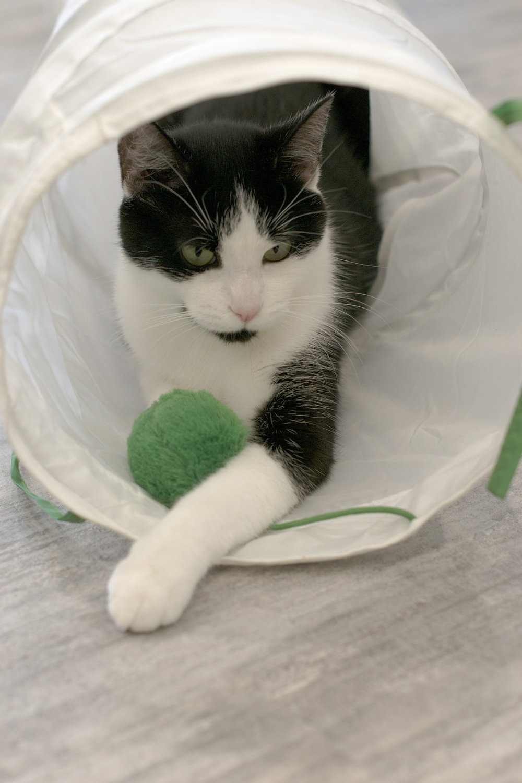 black-and-white-kitty-in-tube.jpg