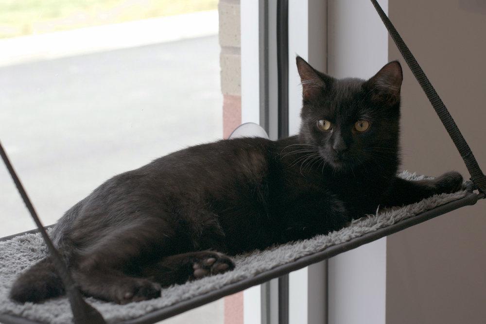 black-kitty-fuzzy-shelf.jpg