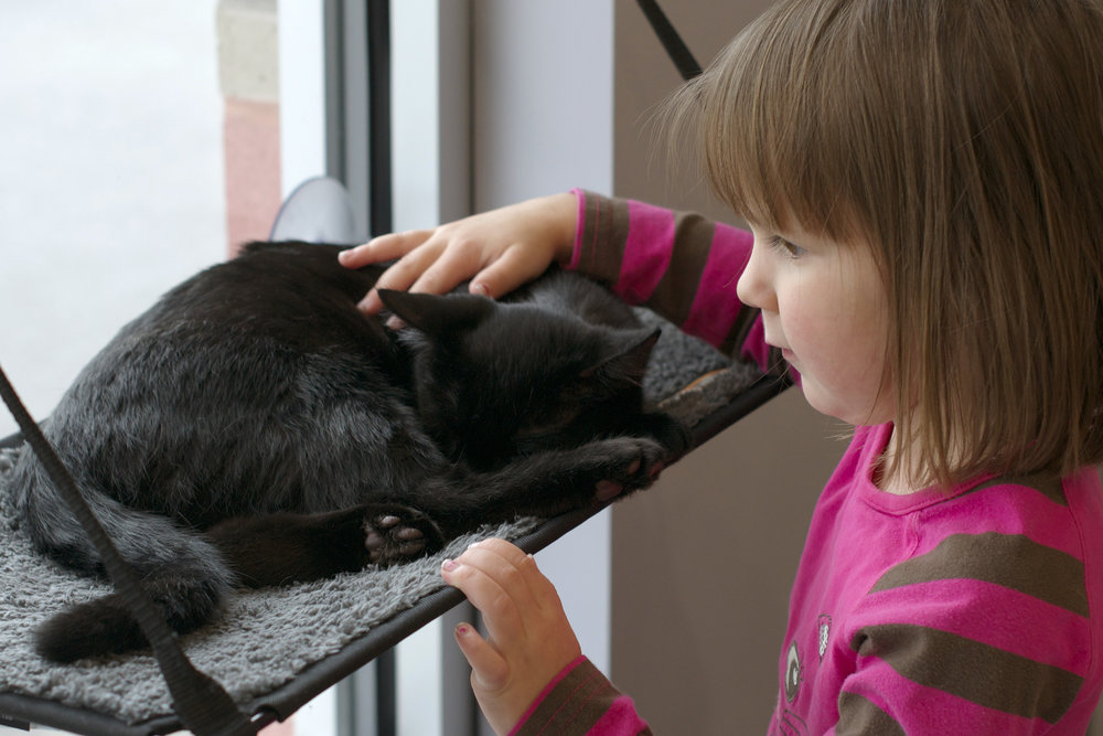 lydia-patting-kitty-on-shelf.jpg