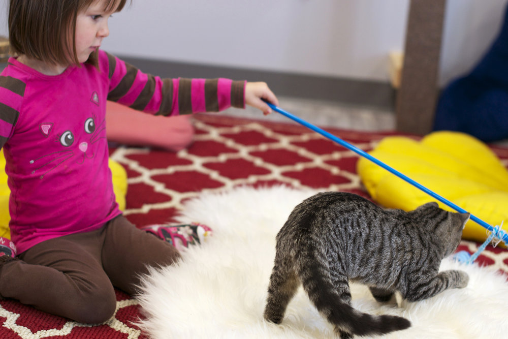 Lydia-playing-with-kitty-on-furry-rug.jpg
