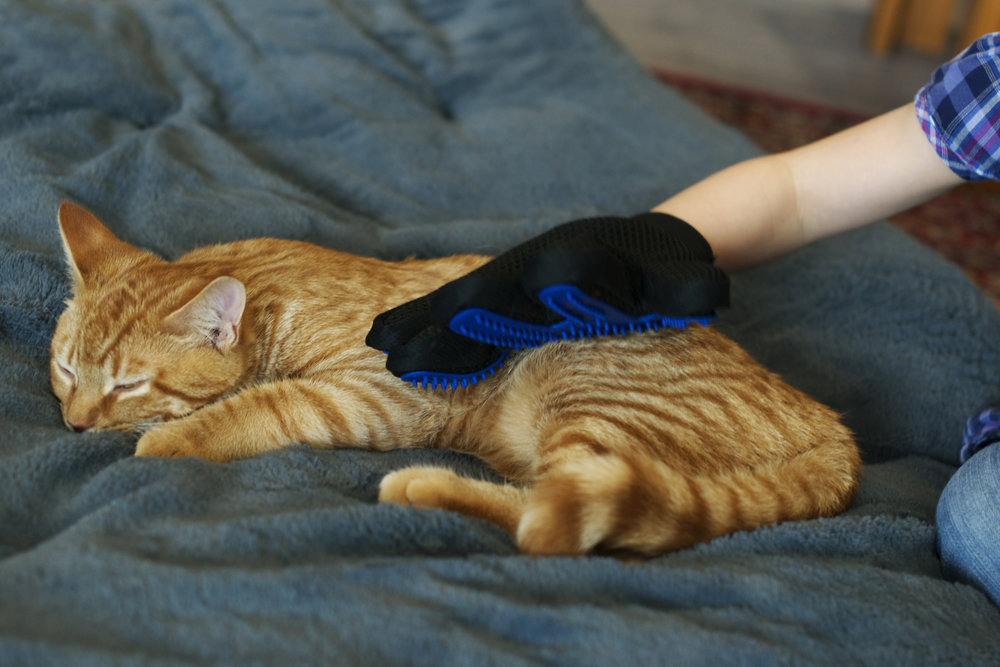 marmalade-being-groomed-with-glove.jpg