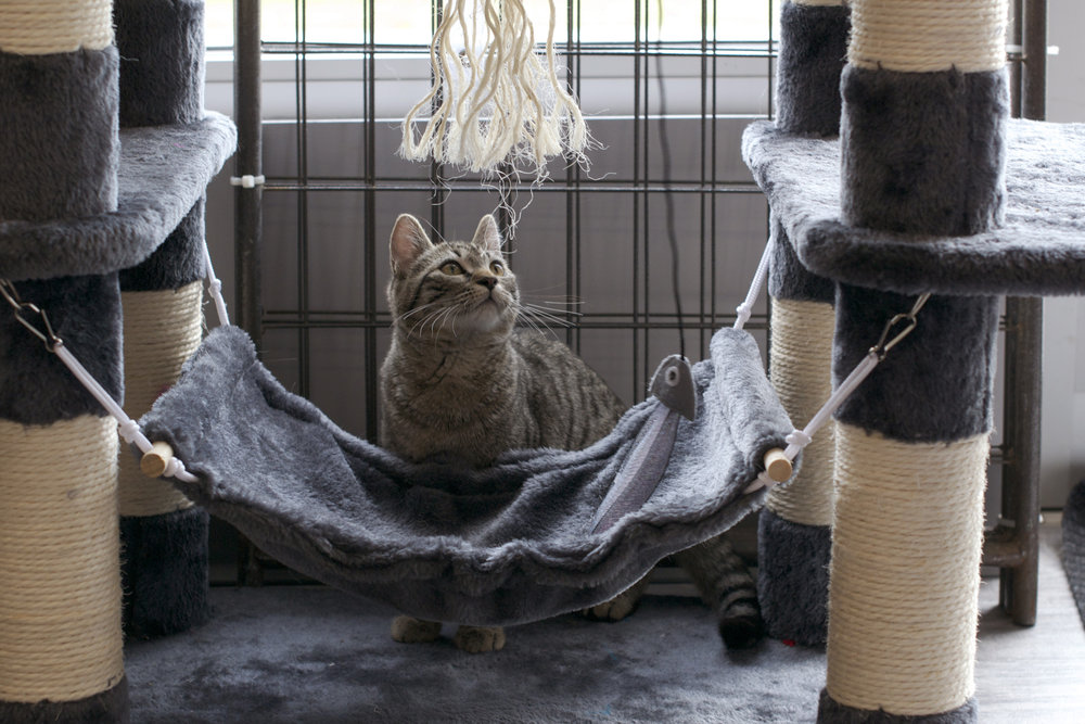 tiger-cat-looking-at-by-hammock.jpg