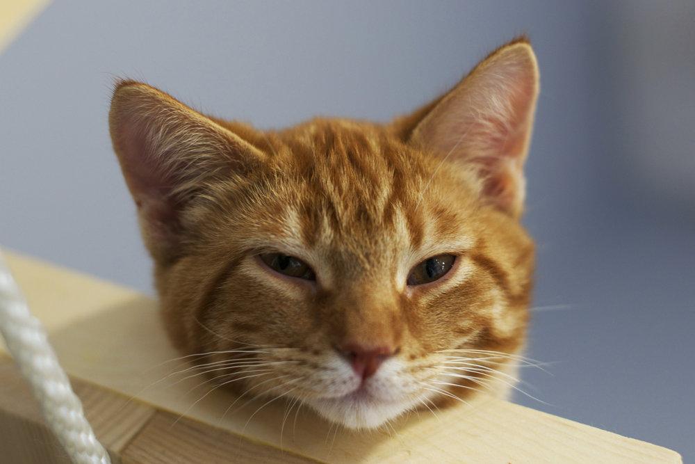 marmalade-waking-up-and-peeking-over.jpg