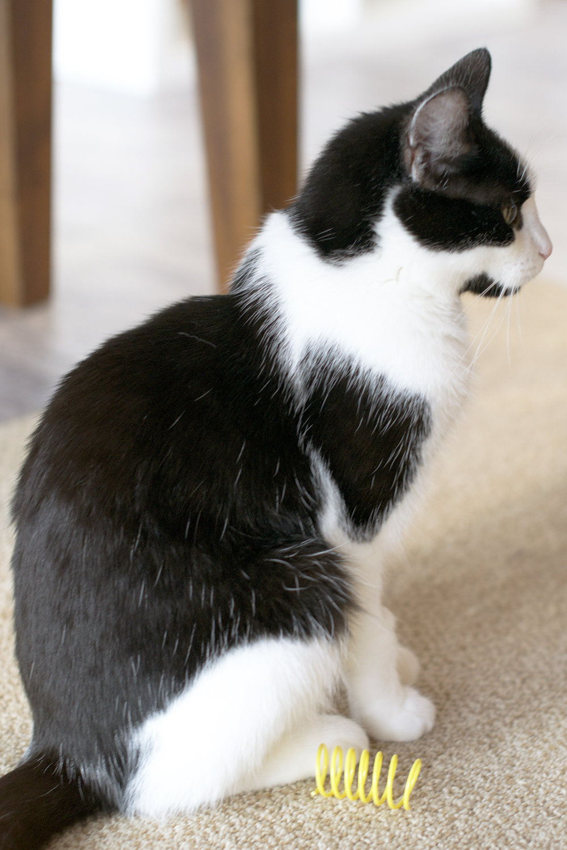 profile-black-and-white-cat.jpg