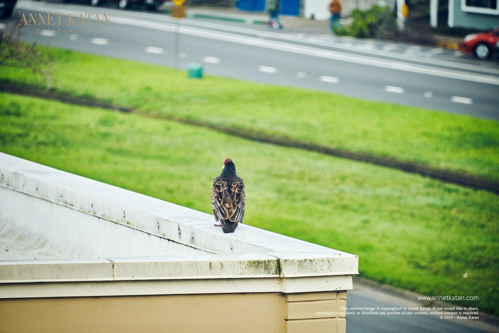 Condors_004.jpg