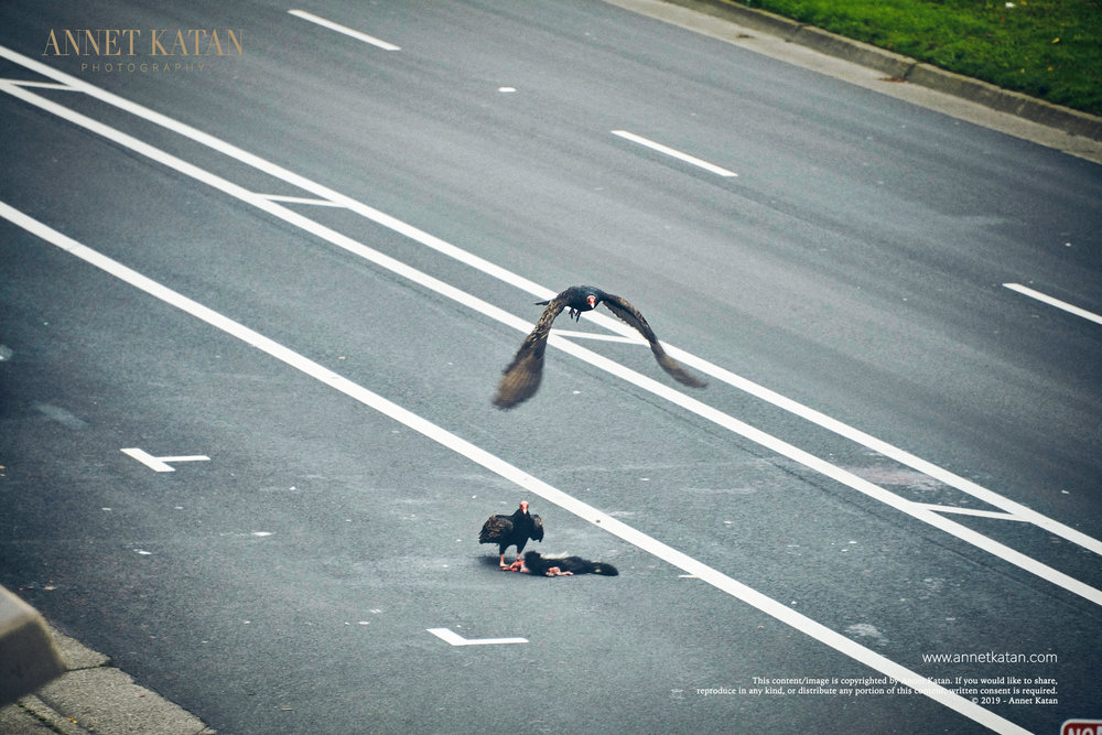 Condors_007.jpg
