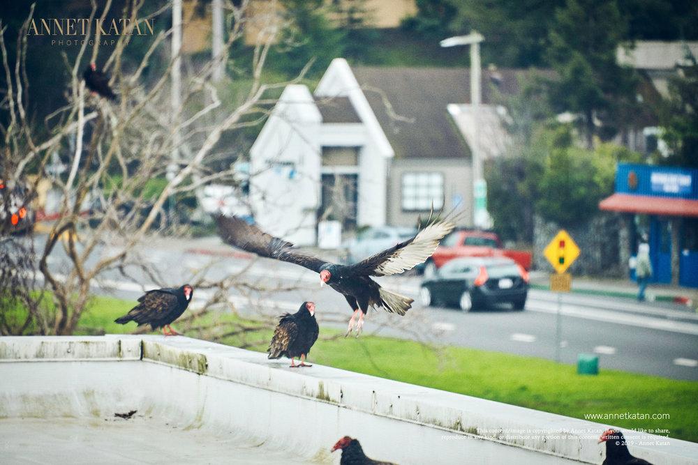 Condors_009.jpg