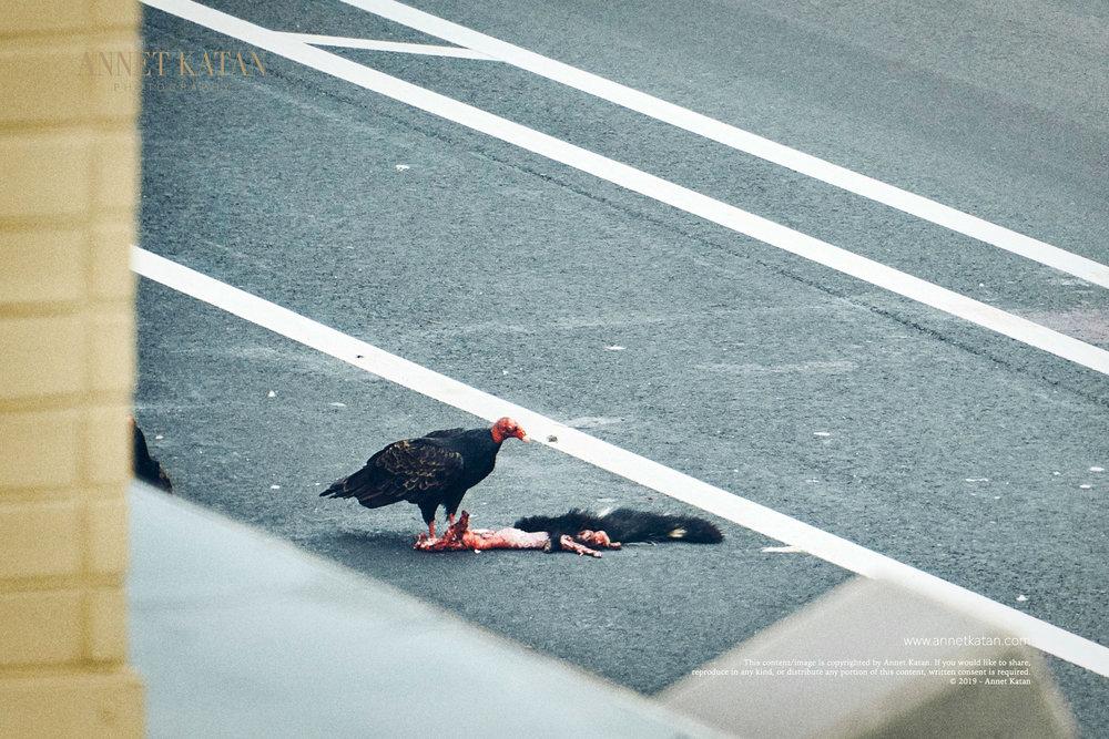 Condors_016.jpg