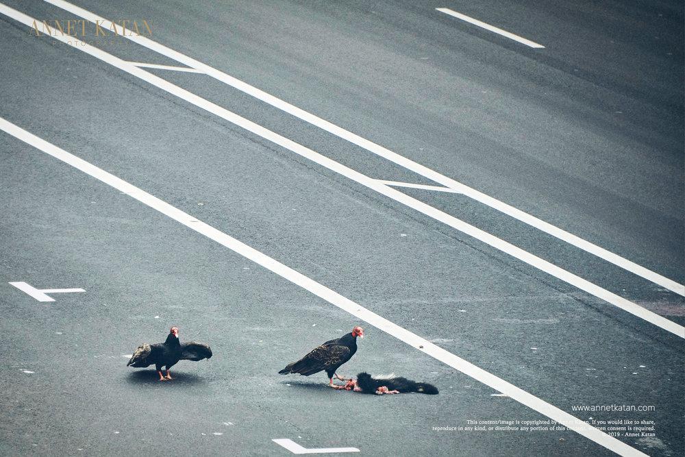 Condors_017.jpg