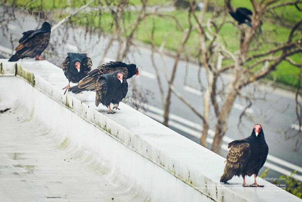 Condors_021.jpg
