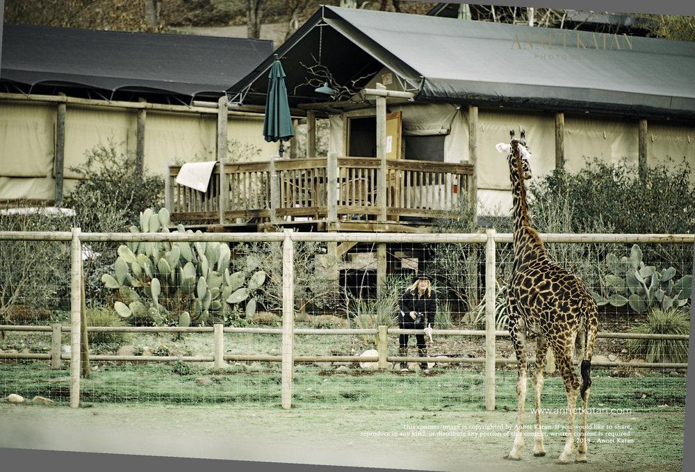 SafariWest_0022.jpg