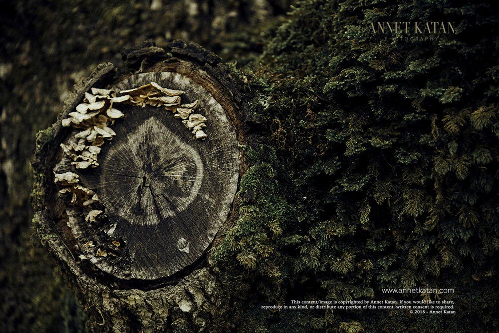 SafariWest_0048.jpg
