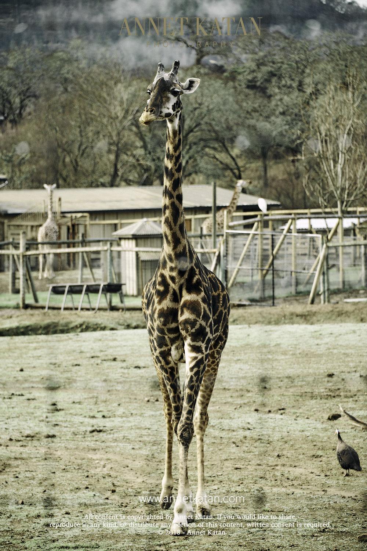 SafariWest_0126.jpg