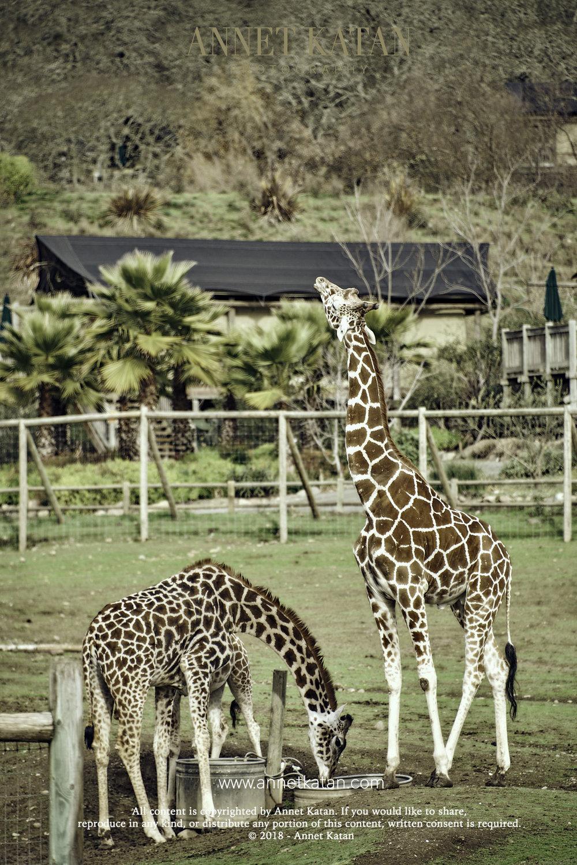 SafariWest_0148.jpg
