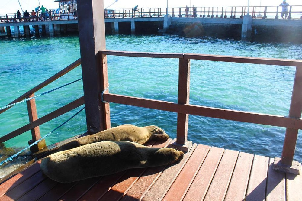 How to visit the Galapagos on a budget. Cheap travel in the Galapagos islands.