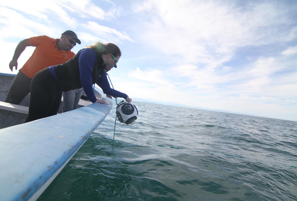 Gustavo Cárdenas Hinojosa and Antonella Wilby deploying the SphereCam in the Sea of Cortez. Photograph credit Francesca Wilby.