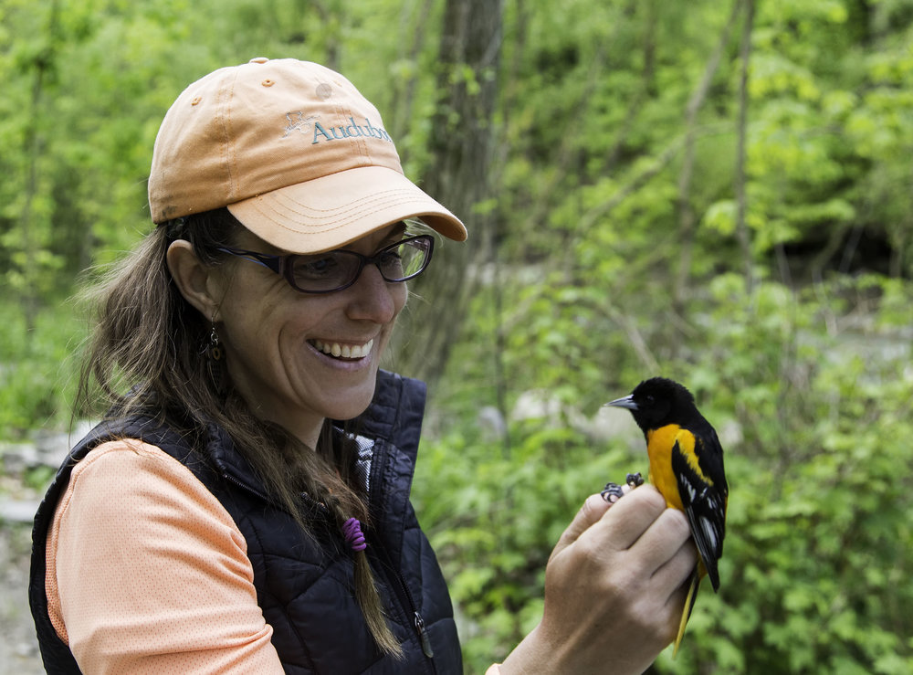 - Laura-Marie Koitsch is an Assistant Director of the EBO as well as the bander-in-charge of the passerine migration monitoring station. She has over a decade's worth of experience working with birds on several continents and prior to becoming an avian researcher, she worked as a wildlife rehabilitator; she also studied philosophy and ancient languages and she holds an international law degree.