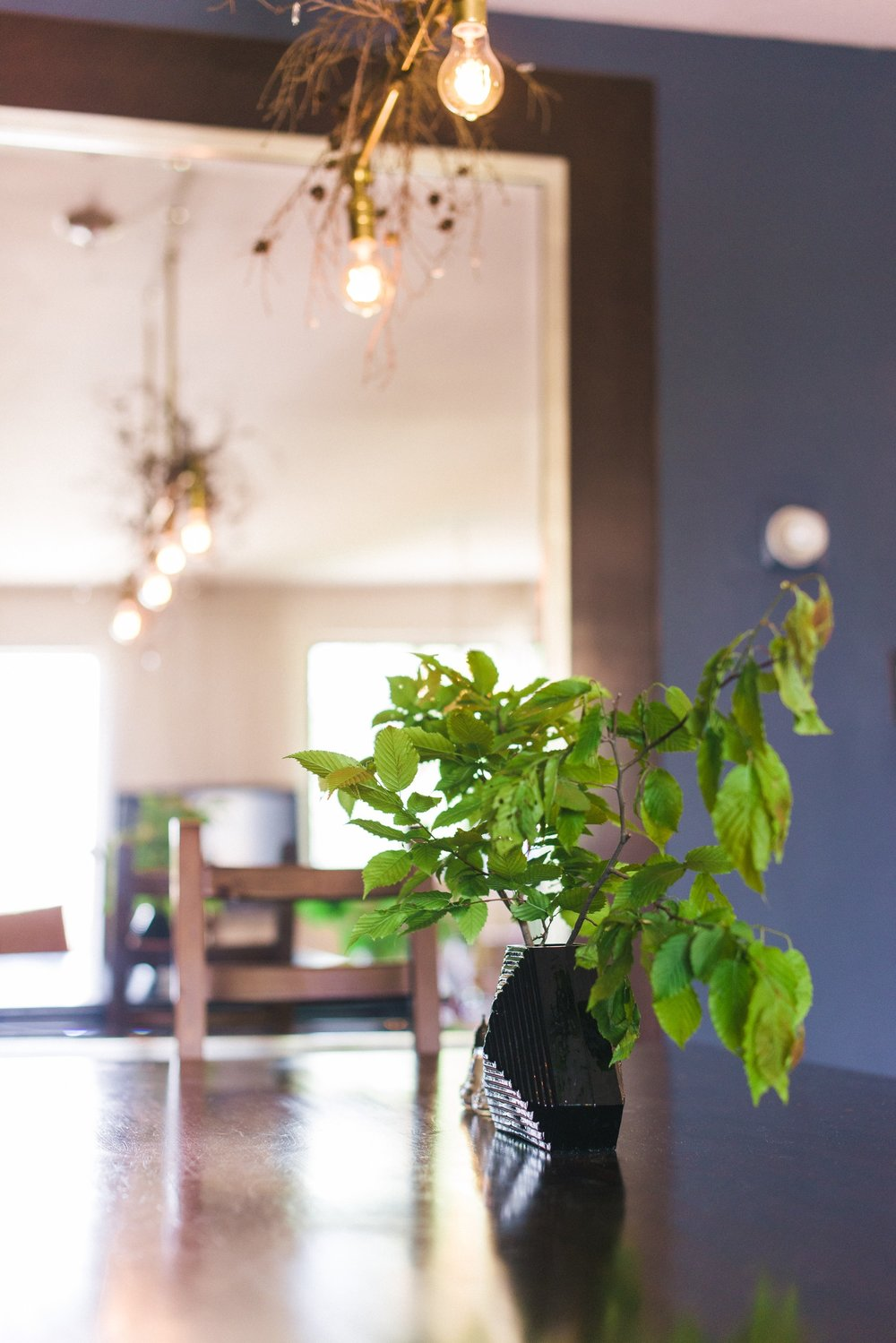 Dining room table with potted plant