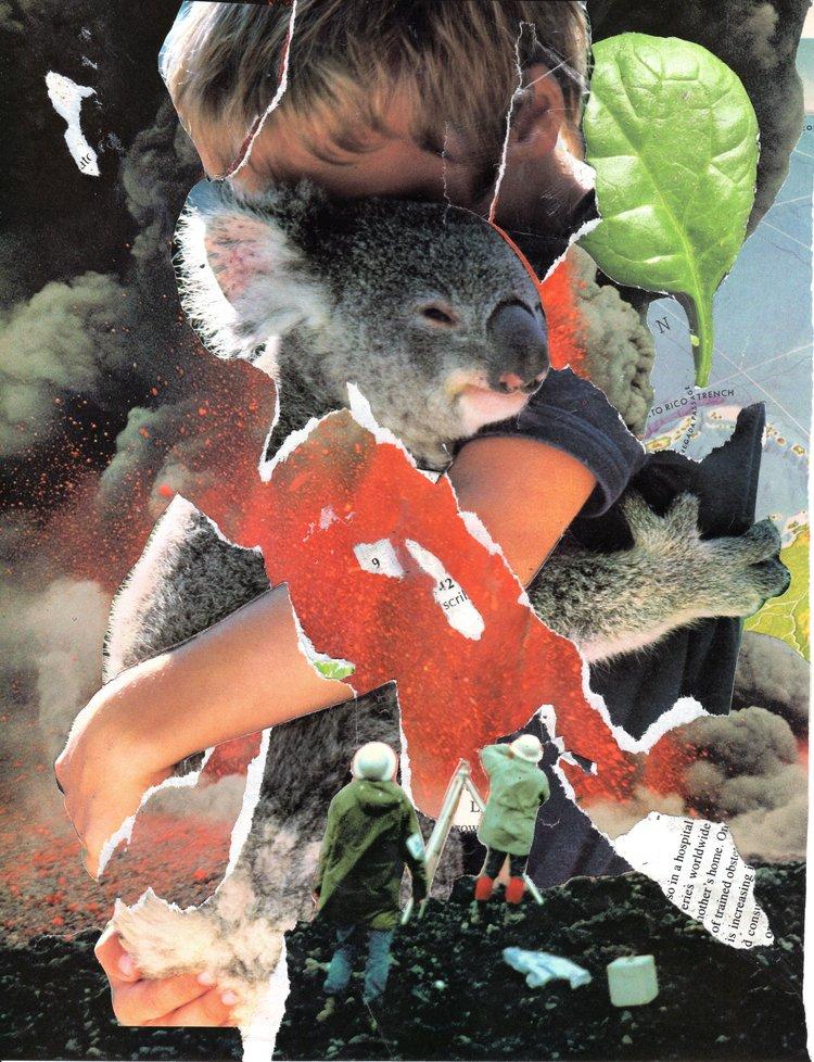 Koala Wracked With Calm, 2012