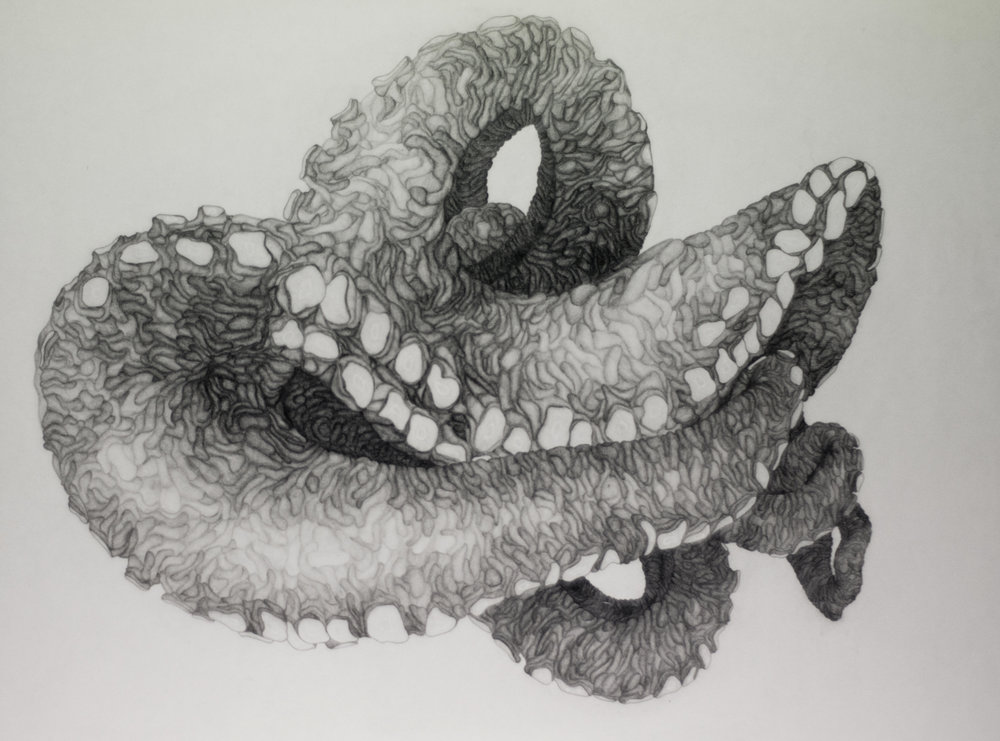 Untitled , 2011. Pencil on paper.