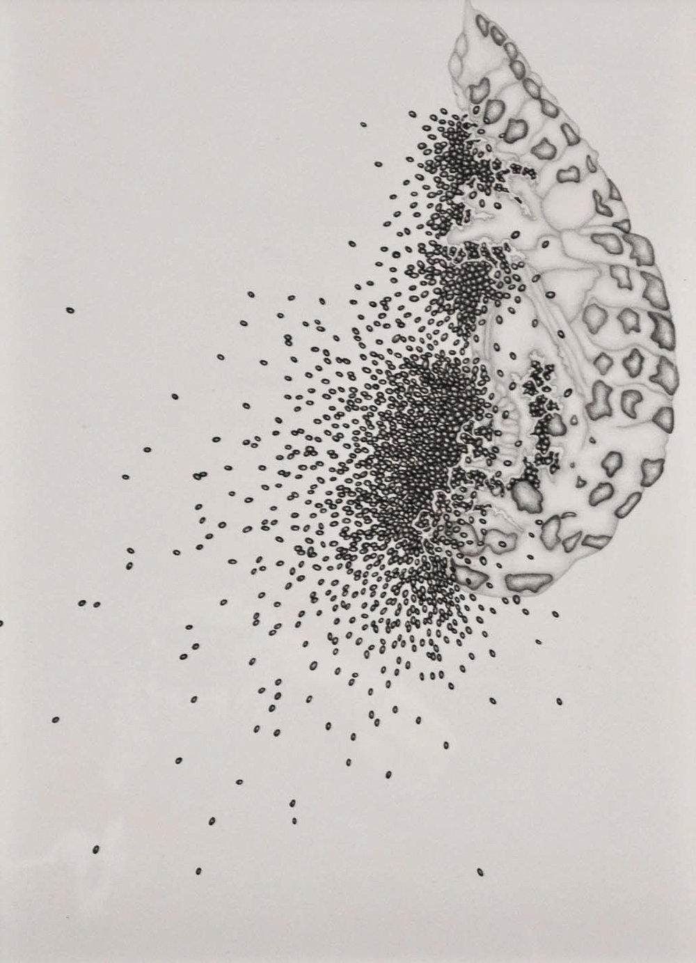 Chrysalis 002,  2013. 50cmx35cm. Pencil on Fabriano paper.