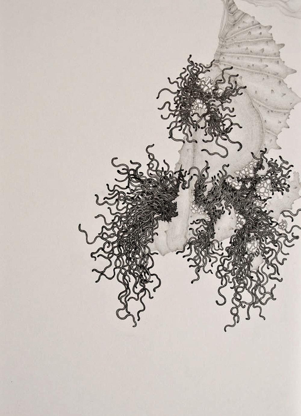 chrysalis001.jpg