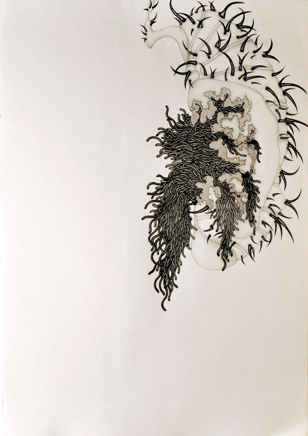 Chrysalis 004,  2013. 50cmx35cm. Pencil on Fabriano paper.